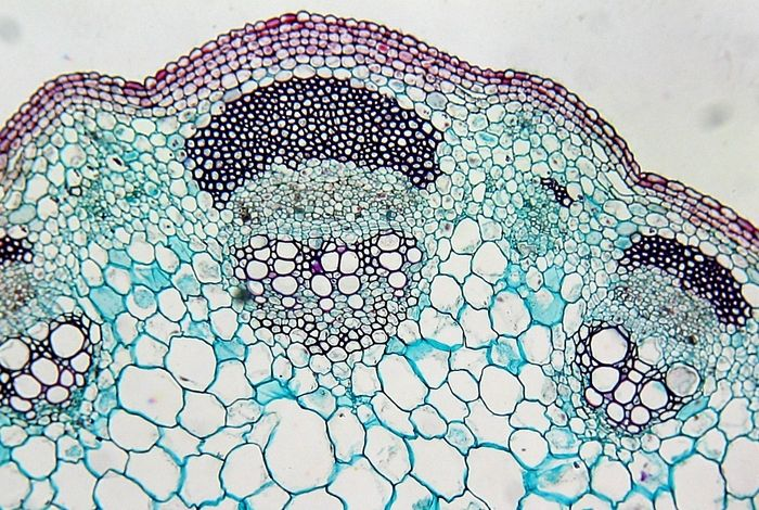 Plant cell under microscope labeled